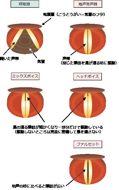 声帯の振動パターン